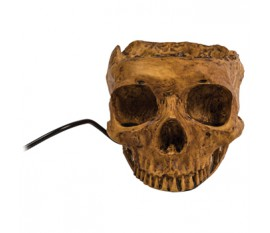 Hub USB crâne